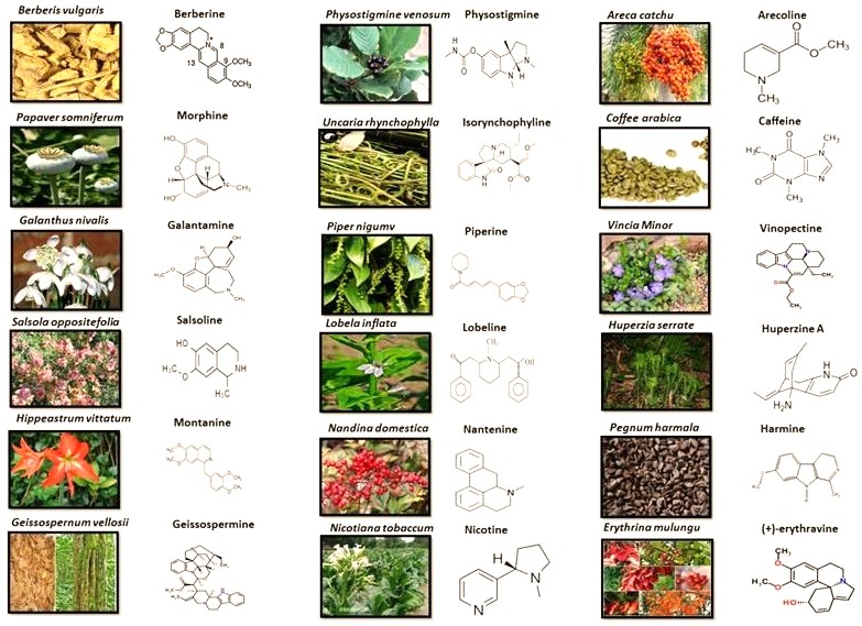 Plant Alkaloids Chemotherapy Treatment Drugs